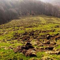 Danni provocati dagli ungulati a un terreno da pascolo